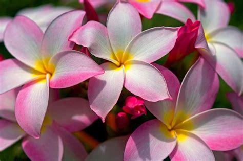 imagenes de flores rosas flores rosas imagui