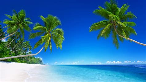 paradise wallpaper hd iphone tropical beach paradise 5k wallpapers hd wallpapers id