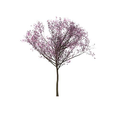 membuat gambar semi transparan photoshop download gambar pohon sakura png grafis media