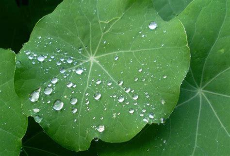 one leaf lotus lotus rock the lotus effect