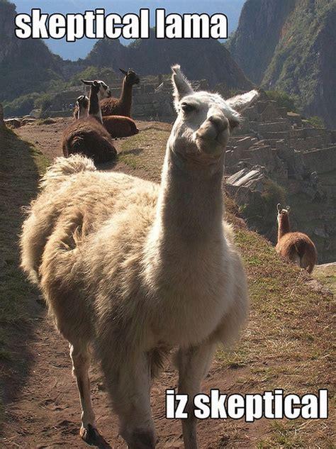 Llama Memes - skeptical llama meme