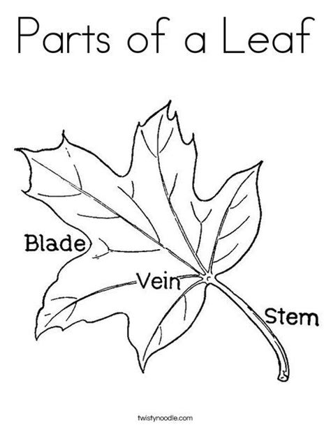 leaf coloring pages for preschool parts of a leaf coloring page learn it pinterest