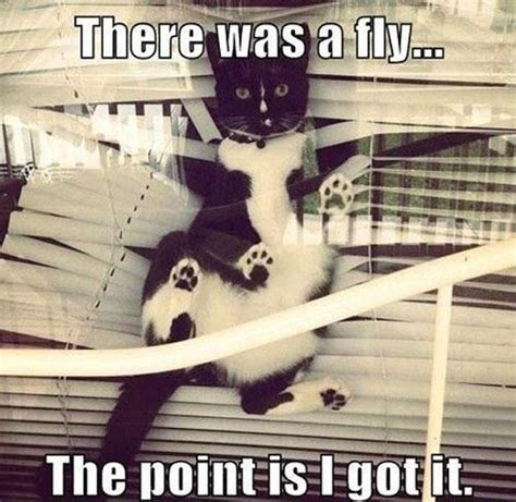 Bad Kitty Meme - funny animal pictures 60 pics