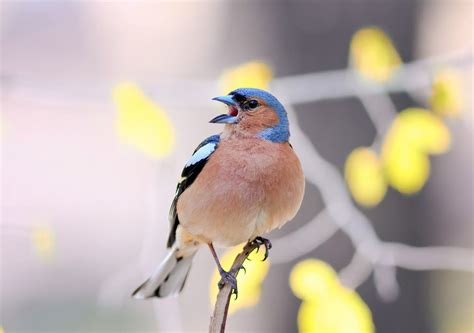 Organic Urban Gardening - songbirds struggle to raise families amid urban noise mnn mother nature network