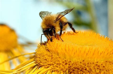 Baru Madu Untuk Anak Ratu Lebah Junior Dha Gold Plus Omega 3 lumina