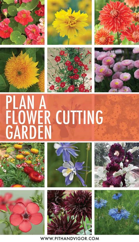 cut flower garden plan cut flower garden plan cutting flower garden design 15