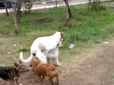 perros cojiendo mujeres stupidvideos perros cojiendo mujere diigo groups