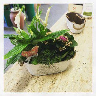 piante d arredamento piante d arredamento
