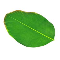 8 X 20 Outdoor Rug Banana Leaf Placemat Maisons Du Monde