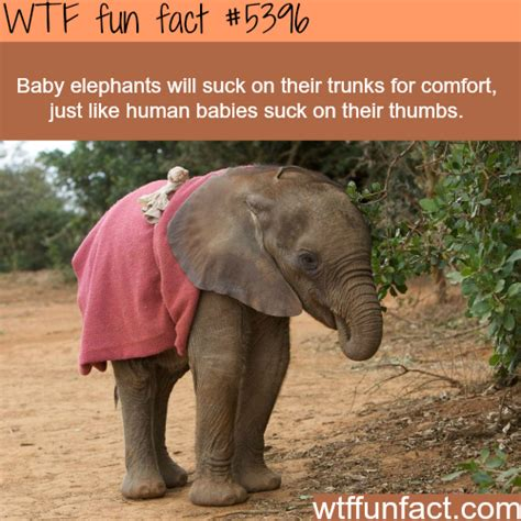 50 wacky things humans do amazing facts about the human wacky series books how elephants are much like humans facts