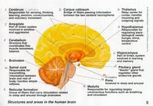 brain webquests