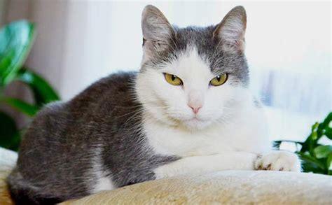 divano gatto 5 modi per evitare che il gatto rovini il divano