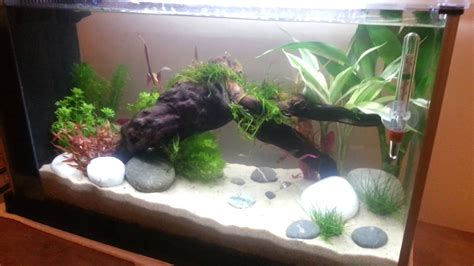 Fluval Spec V Aquascape by Fluval Spec V