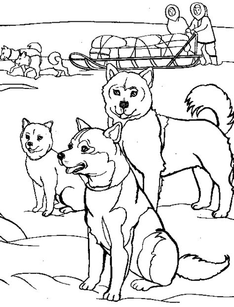 sled dog coloring pages to print coloring pages sled dog coloring pages to print coloring pages