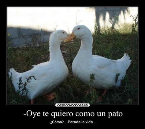 imagenes te quiero como los patos pin oye te quiero como los patos imagenes de amor para