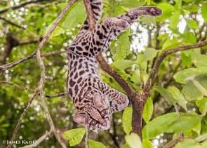 photos of adorable baby animals in costa rica james kaiser