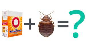 bed bug faq can baking soda kill bed bugs