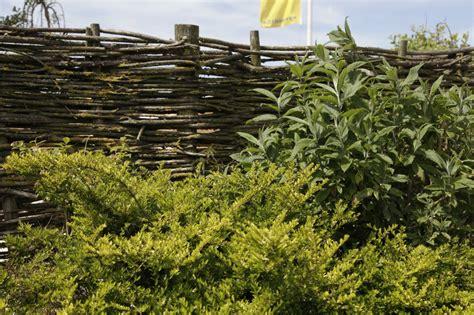 sichtschutz pflanzen garten 686 sichtschutz f 252 r den garten zinsser gartengestaltung