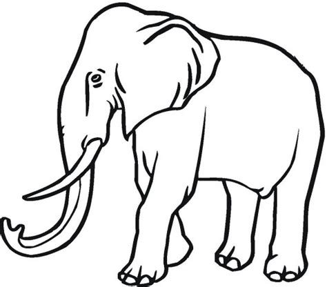 female asian elephant head coloring coloring pages