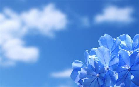 fiori wallpaper sfondi fiori 44 immagini