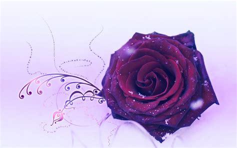 wallpaper background rose beautiful rose flower wallpaper backgrounds desktop