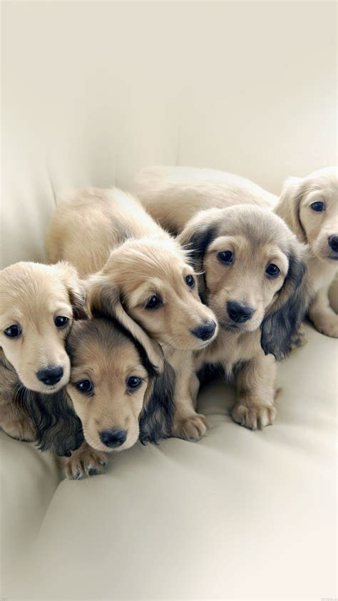 puppy dog retriever family animal papersco