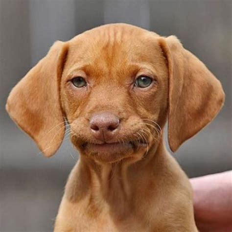 Disappointed Dog Meme - 94 best memes disappointment disbelief unhappy
