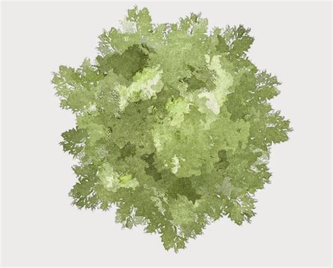 ba garden design y3 greenwich uni robert dickie 2d tree rendering in photoshop