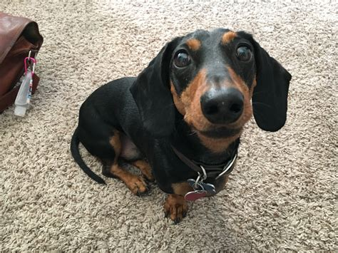 how do you stop a from barking how to a dachshund to stop barking why do dogs bark to stop barking