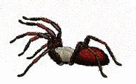 que son imagenes gif imagenes animadas de aranas gifs animados de animales