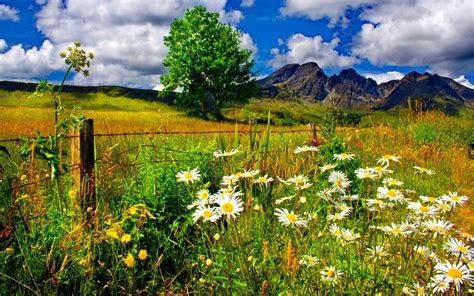 zachi spring mountain landscape spring landscape chamomile flowers and green grass