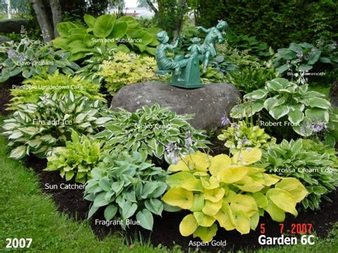 436 Best Images About Hosta Gardening On Pinterest Shade Hosta Garden Layout