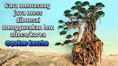 akar rasamala  pohon  akarkua
