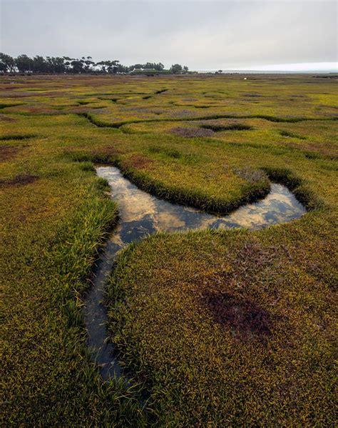 Landscapes Bryn De Kocks West Coast Landscaping