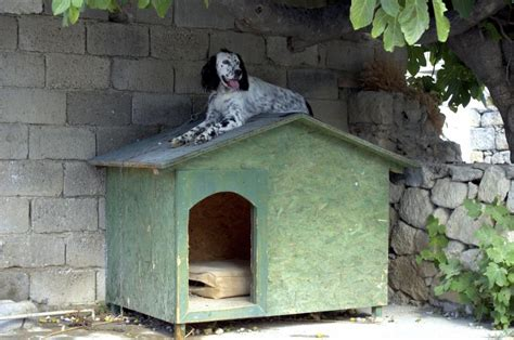 how to keep dog house cool how to keep a dog cool in a cer shell ehow