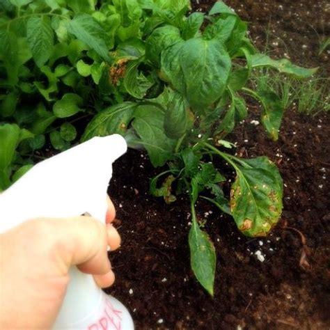 Semprotan Tanaman Semprotan Hama Sepritan Obat Tanaman pengen punya kebun indah di rumah ikuti 7 tips merawat bunga ini yukepo
