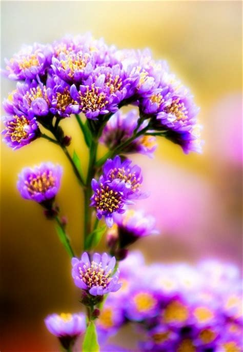 by alan shapiro beautiful flowers pinterest snuggles climbing some more flowers the color purple pinterest
