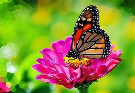 imagenes mariposas rosas reales bonitas mariposas