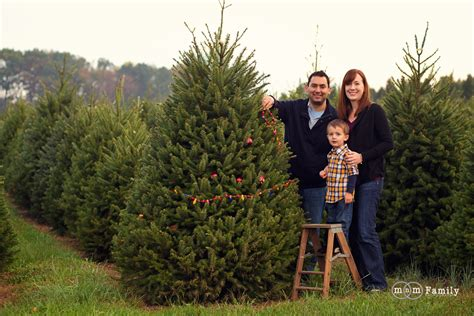best 28 christmas tree farm philadelphia cut your own