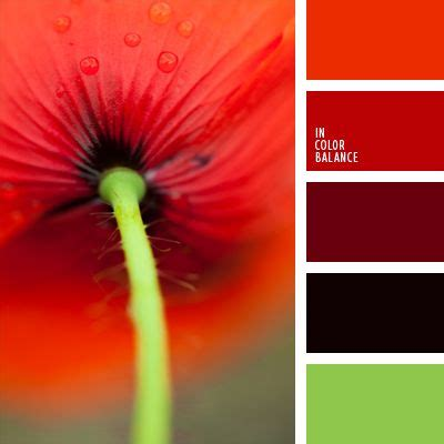 poppy color 26 best beautiful poppy colors images on color