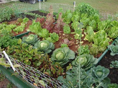 What To Plant In A Small Vegetable Garden Best Plants Selection To Build Small Home Garden 4 Home