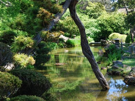 Botanical Garden In San Francisco San Francisco Botanical Garden San Francisco Tourist Attractions Sightseeing Eventseeker