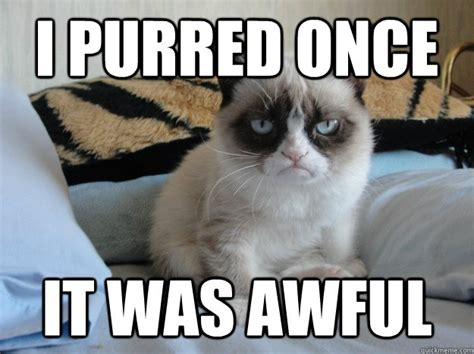 Best Of Grumpy Cat Meme - 5 best photos of the grumpy cat internet meme socialeyezer