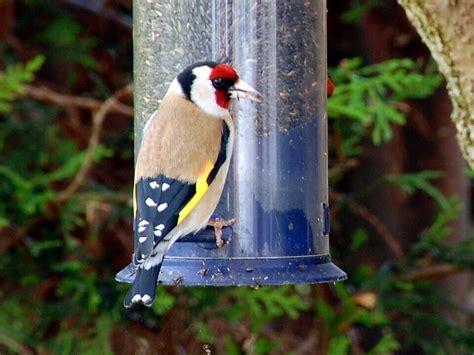 how to attract winter birds bird feed varieties