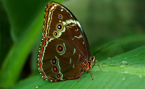 Khazanah Flora Dan Fauna Nusantara ragam kupu kupu