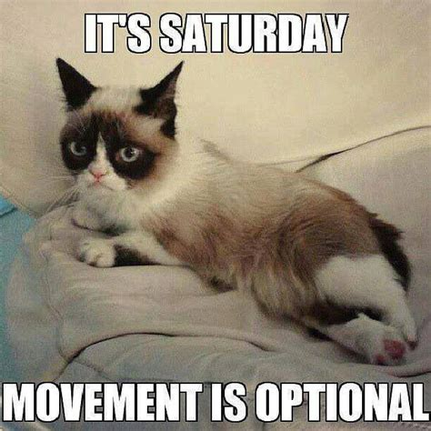 Grumpy Cat Good Morning Meme - it s saturday quotes quote days of the week good morning