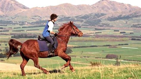 horse hanmer horses hanmer springs  zealand youtube