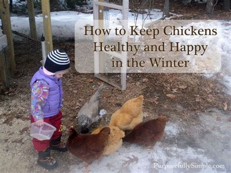 How To Keep Chickens In Your Backyard 525 Best All Things Chicken Images On Chicken Coops Raising Chickens And Backyard
