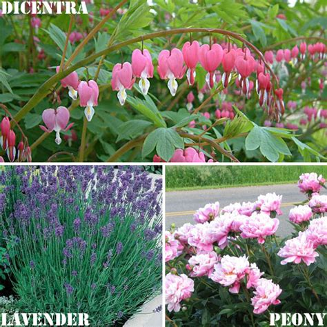 cottage garden plants list garden design 32847 garden inspiration ideas