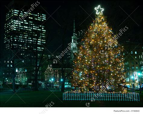 picture of bostons christmas tree